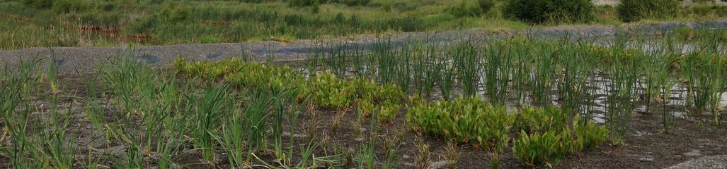 A constructed wetland, designed and monitored by SYLVIS, treats landfill leachate.